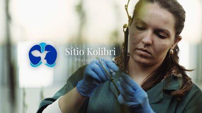 kolibri-film-cover